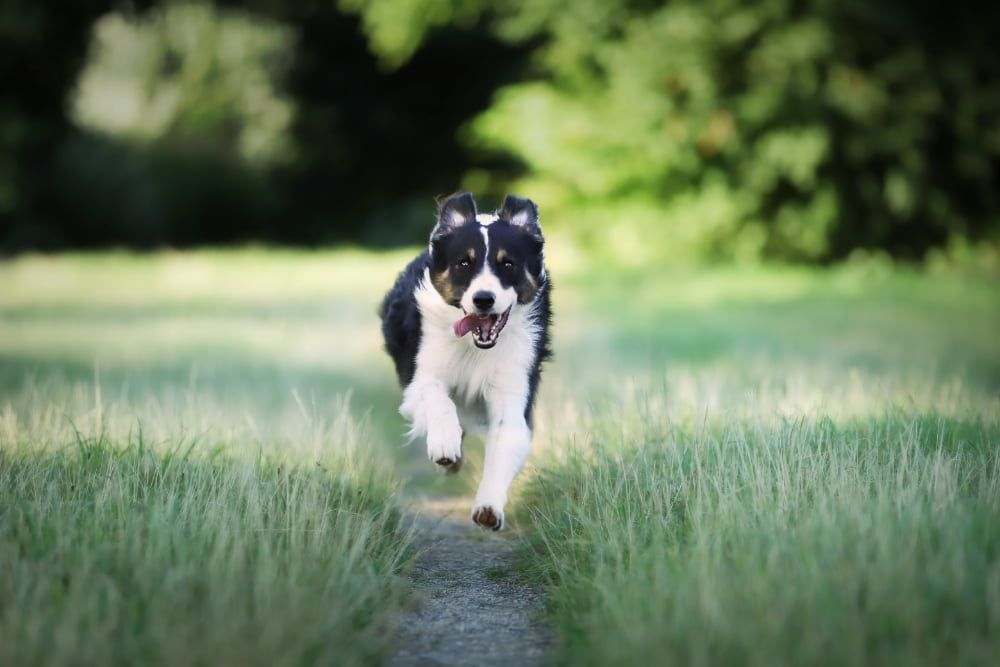 best joint health supplements for dogs
