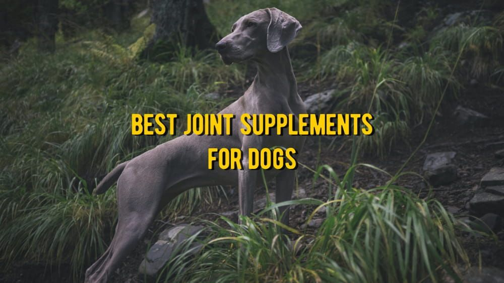 best joint supplemets for dog
