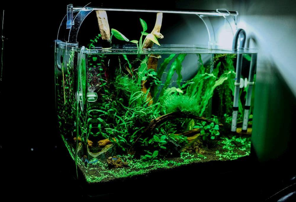 best led lamps for aquarium plants