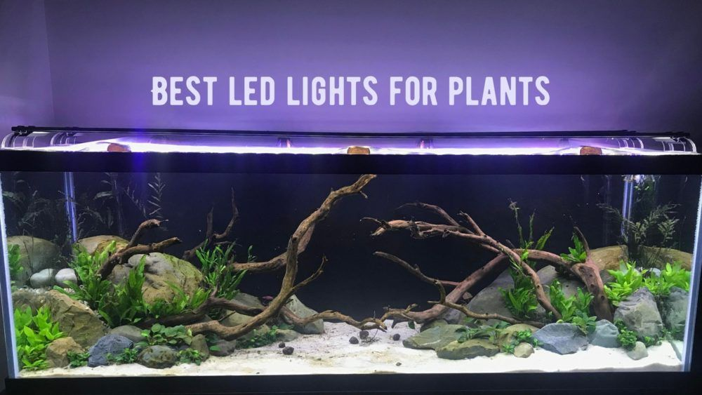 best led lights for a reef tank