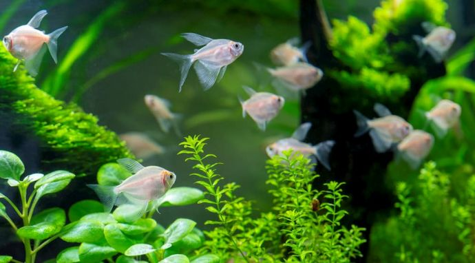 best live plants for aquarium