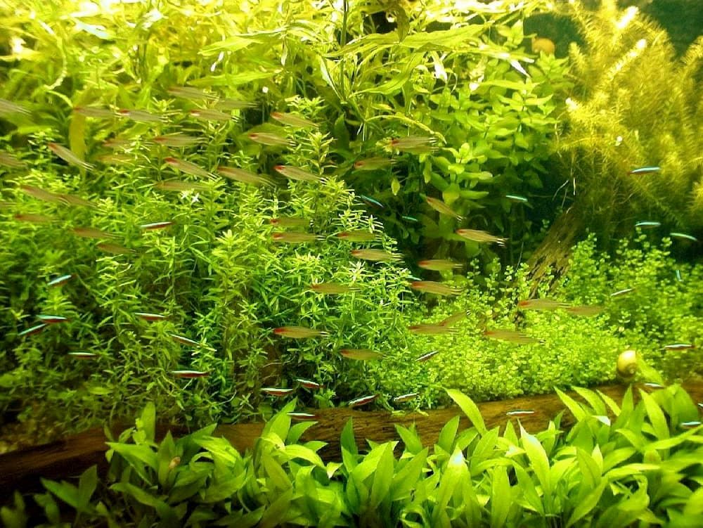 best plants for freshwater fish tank