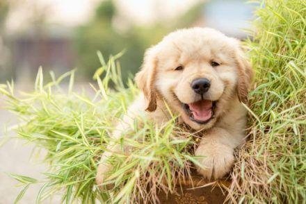 best puppy dry dog food