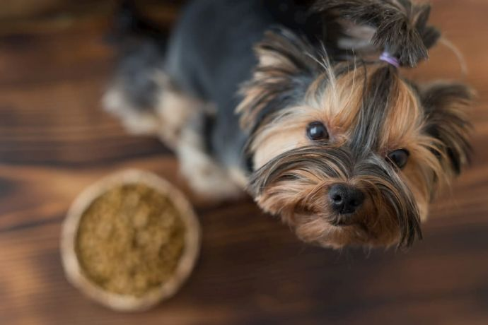 TOP-20 Best Small Breed Puppy Food