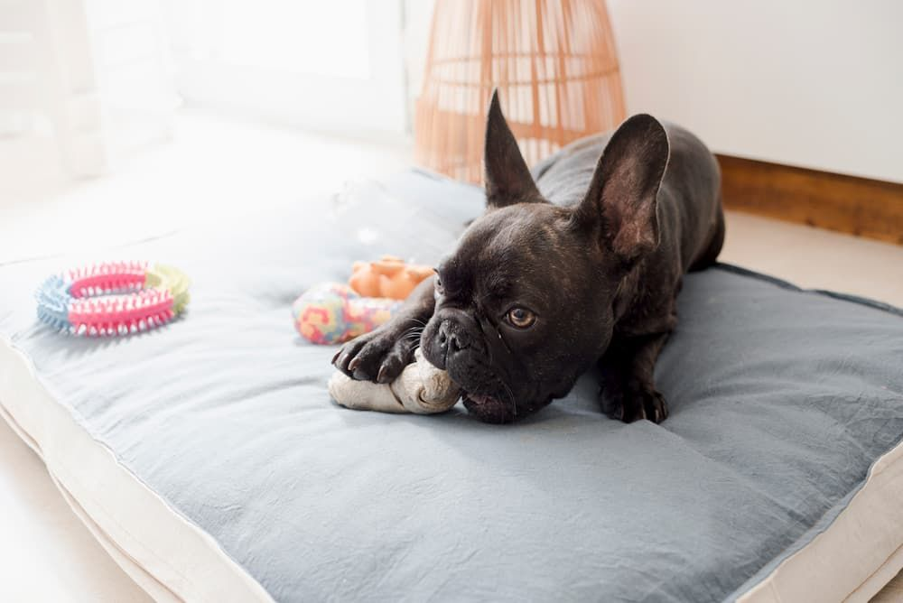 best rated dog beds