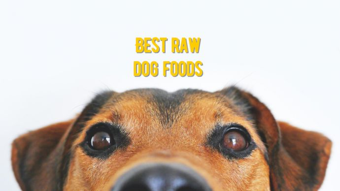best raw dog foods