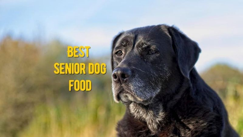 best-senior-dog-food-review