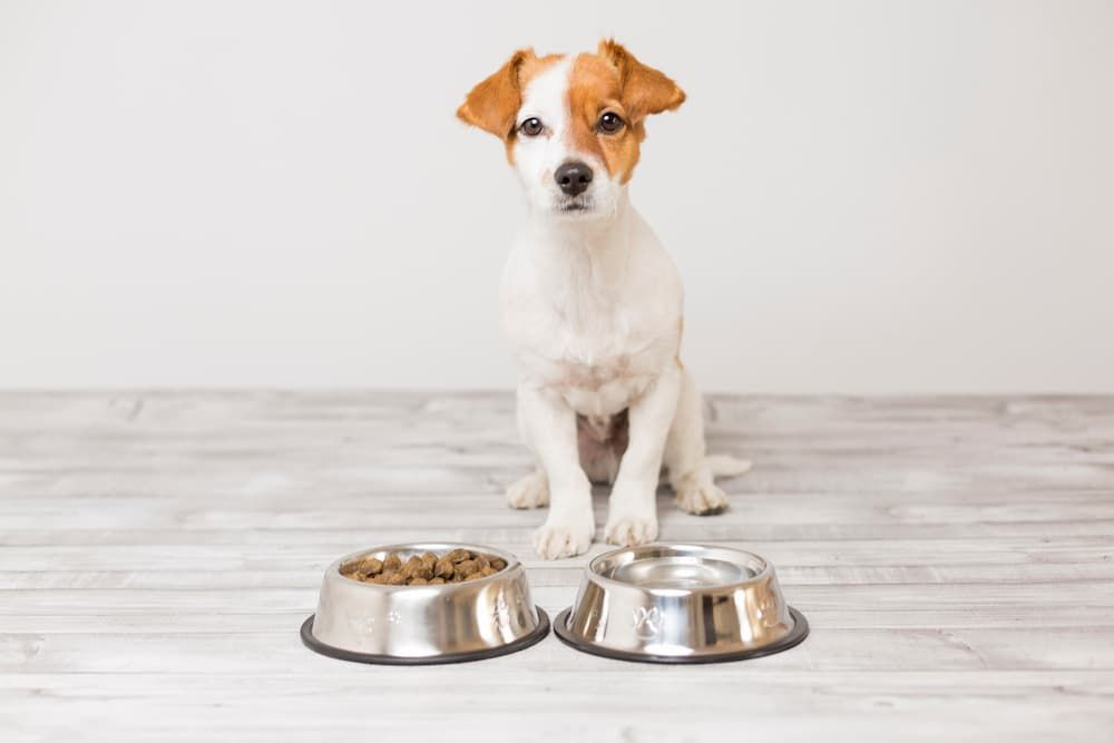 best small breed puppy food