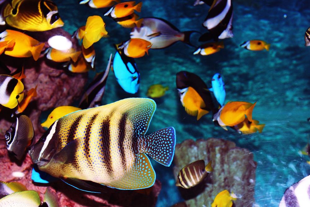 best starter fish for saltwater aquarium