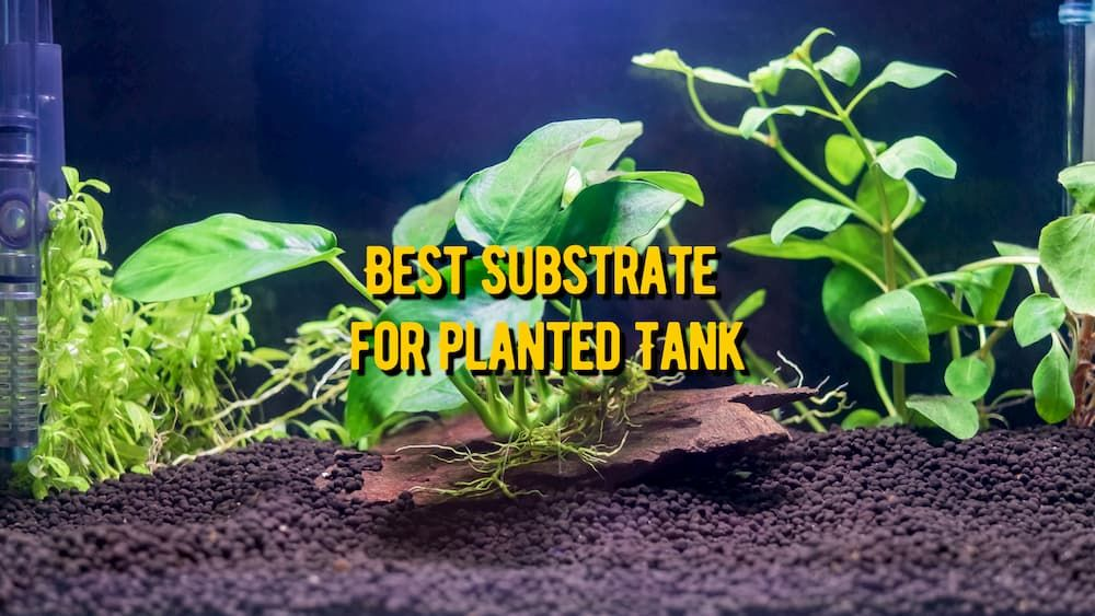 best substrate for planted tanks