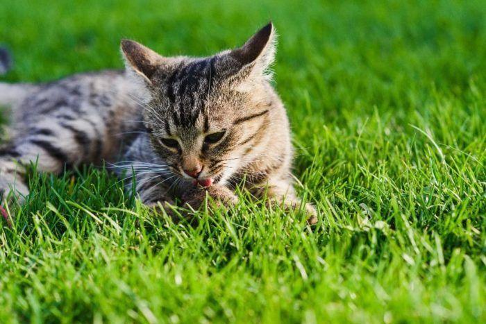 best timed cat feeder