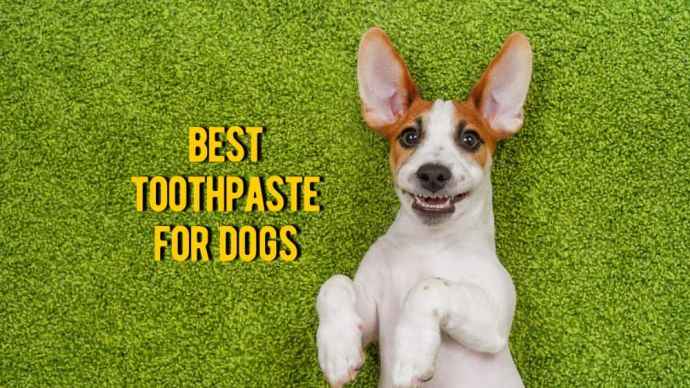 best toothpaste for dogs