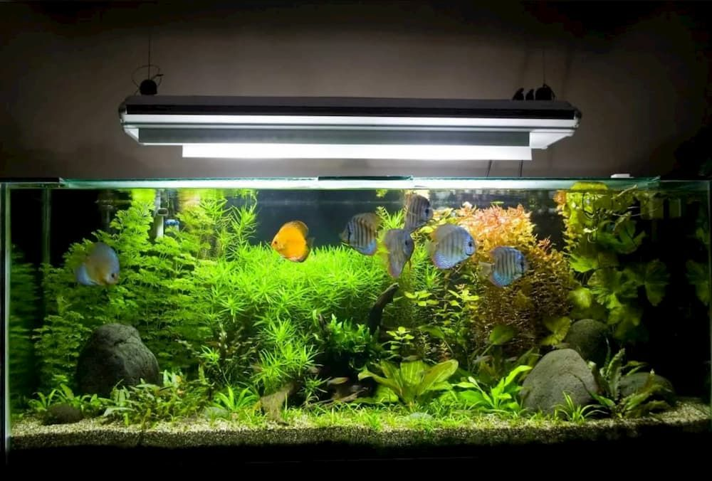 best uv sterilizers for aquarium
