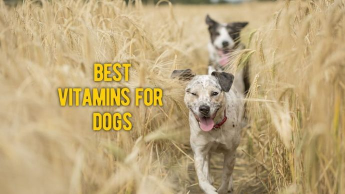 best vitamins for dogs