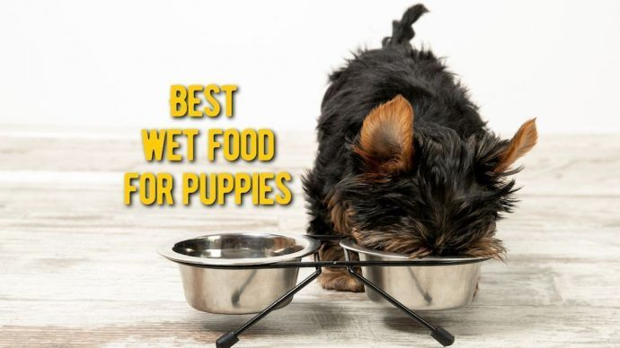 best wet food for puppies