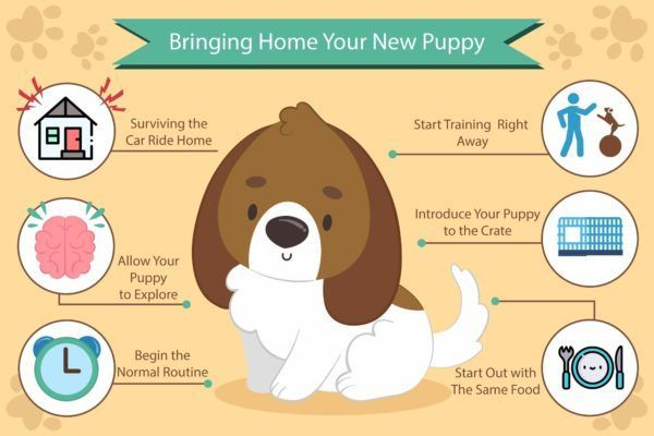 bringing home your new puppy