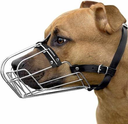 bronzedog pitbull dog muzzle