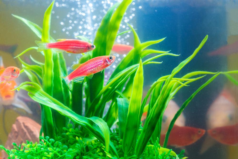 build a mini aquarium