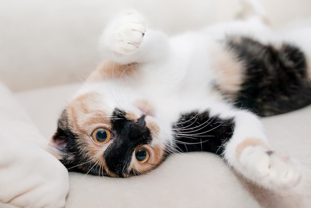 buying guide on probiotics for cats