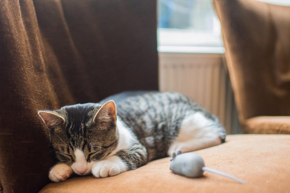 calcium deficiency in cats