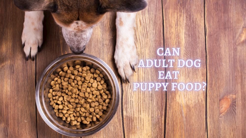 can adult dog eat puppy food