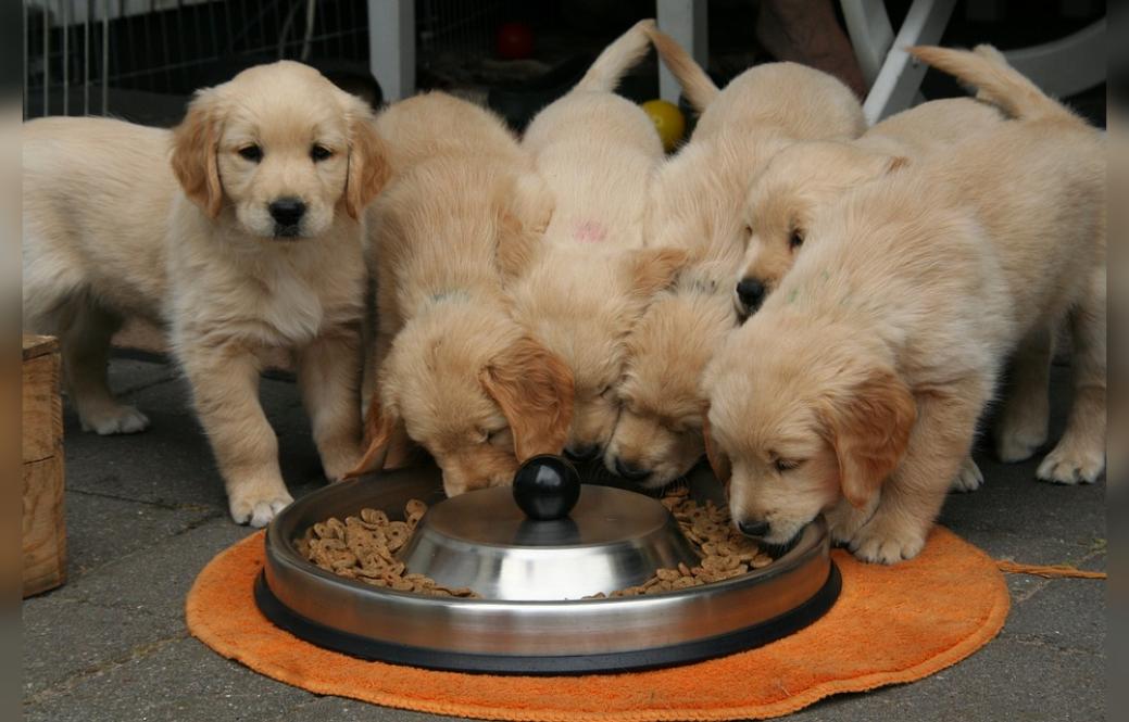 can my senior dog eat puppy food