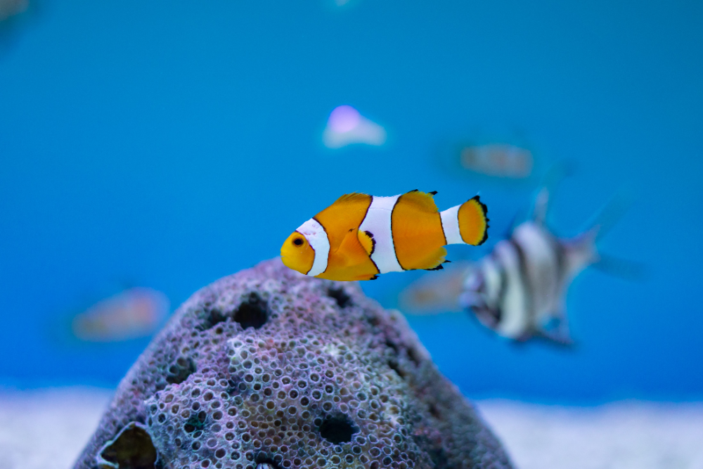 can you change aquarium water too often