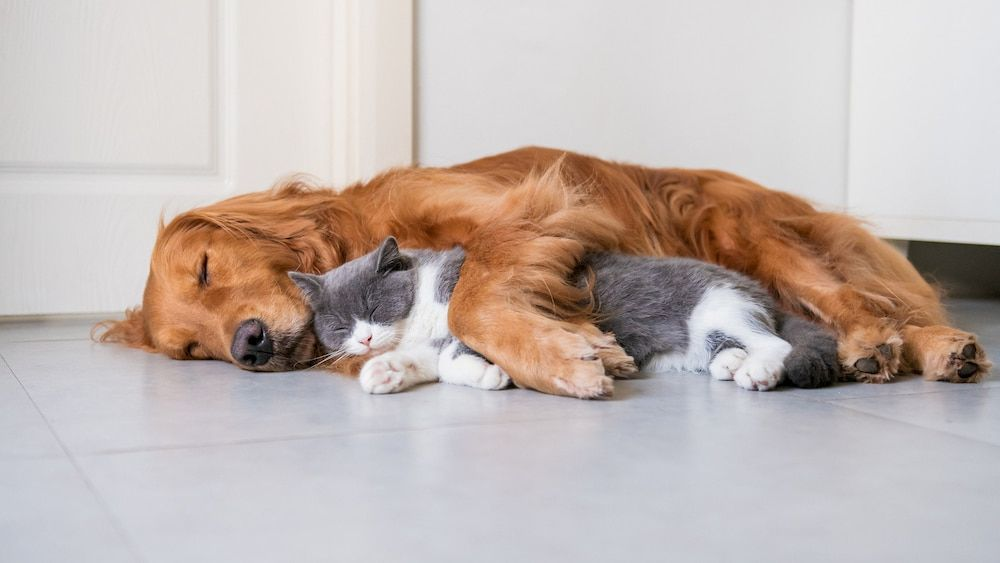 can you train a dog to be good with cat
