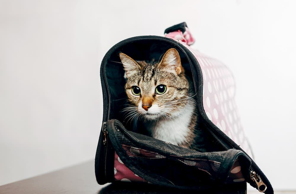 cat backpack review