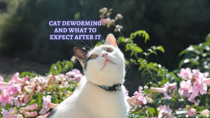 cat deworming and what to expect after deworming a cat