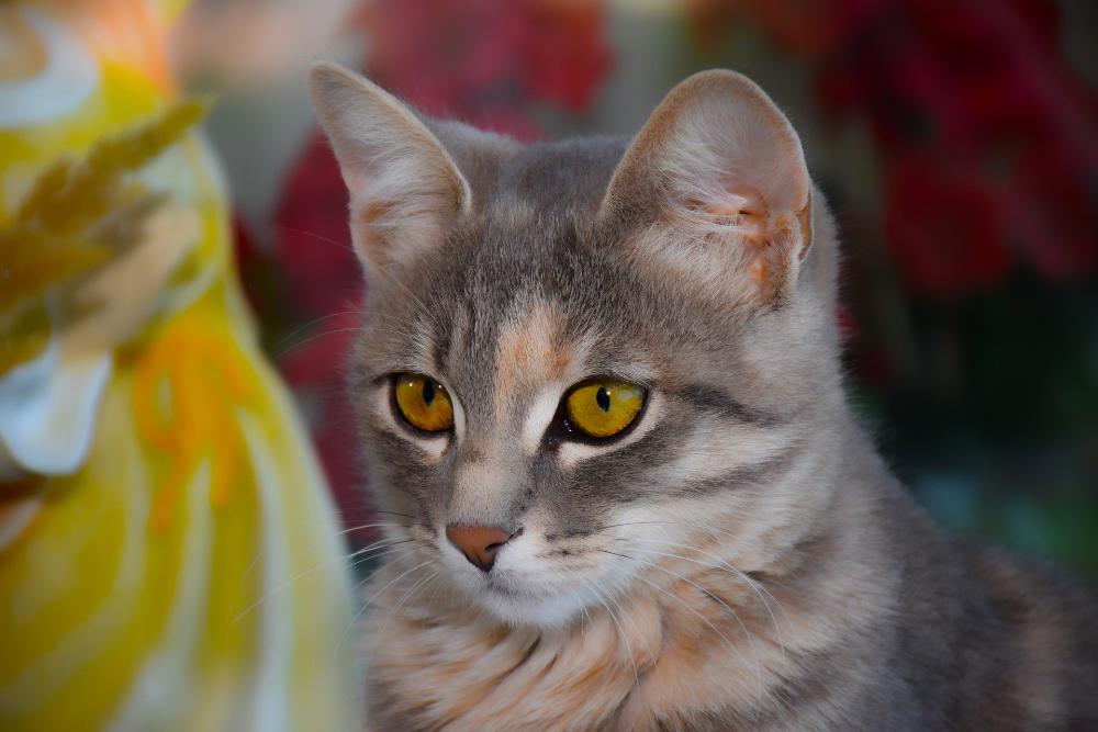 cat dietary indiscretion