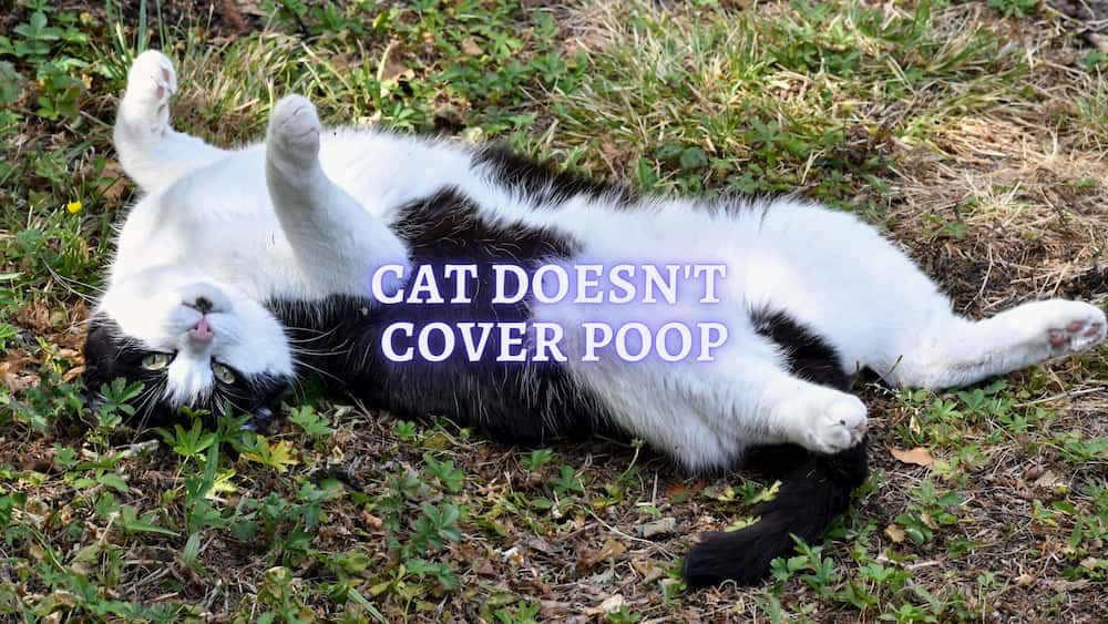 cat doesnt cover poop