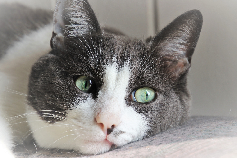 cat kidney disease symptoms