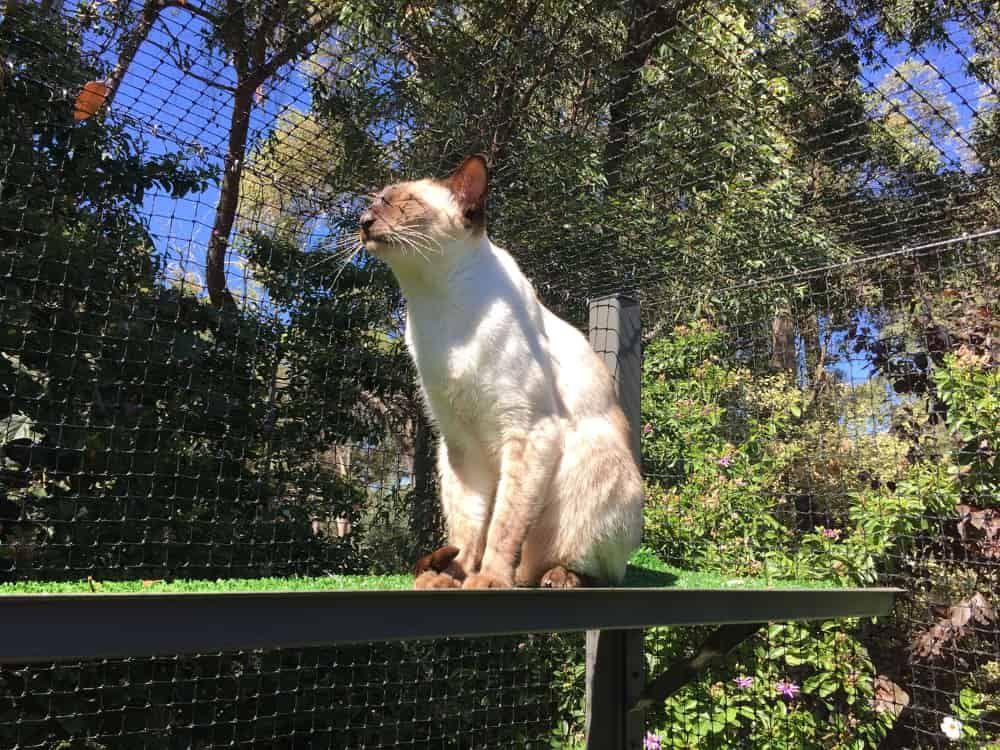 cat outside run catio