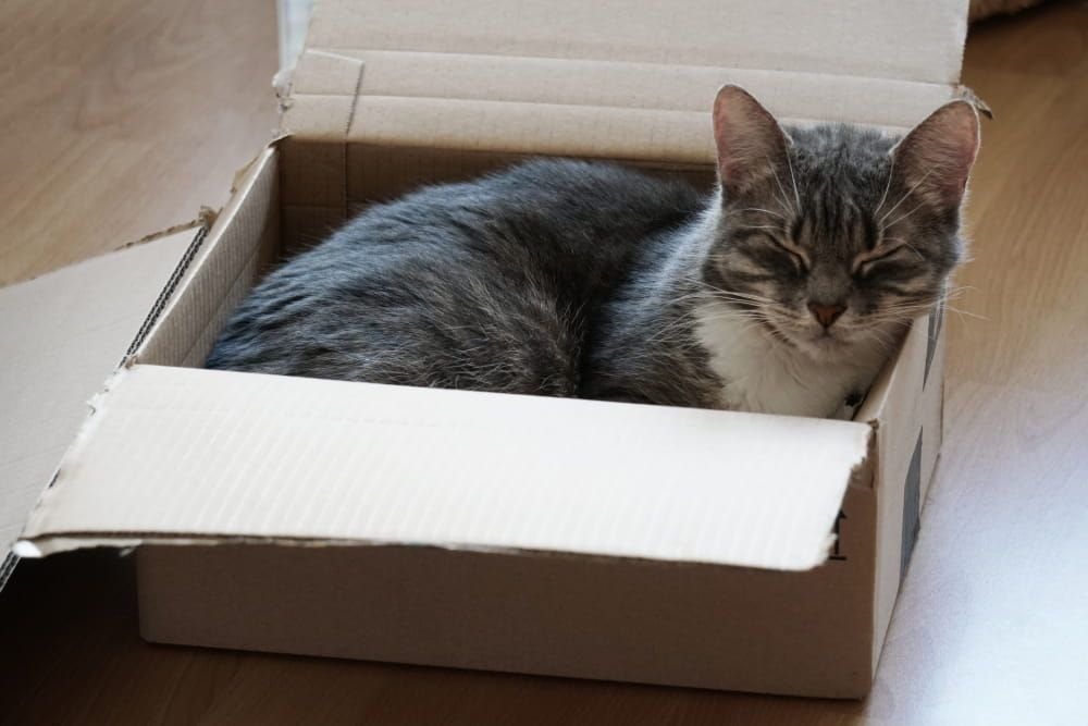 cat sleeping positions cat in a box