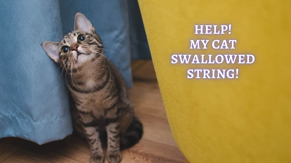 cat swallowed string