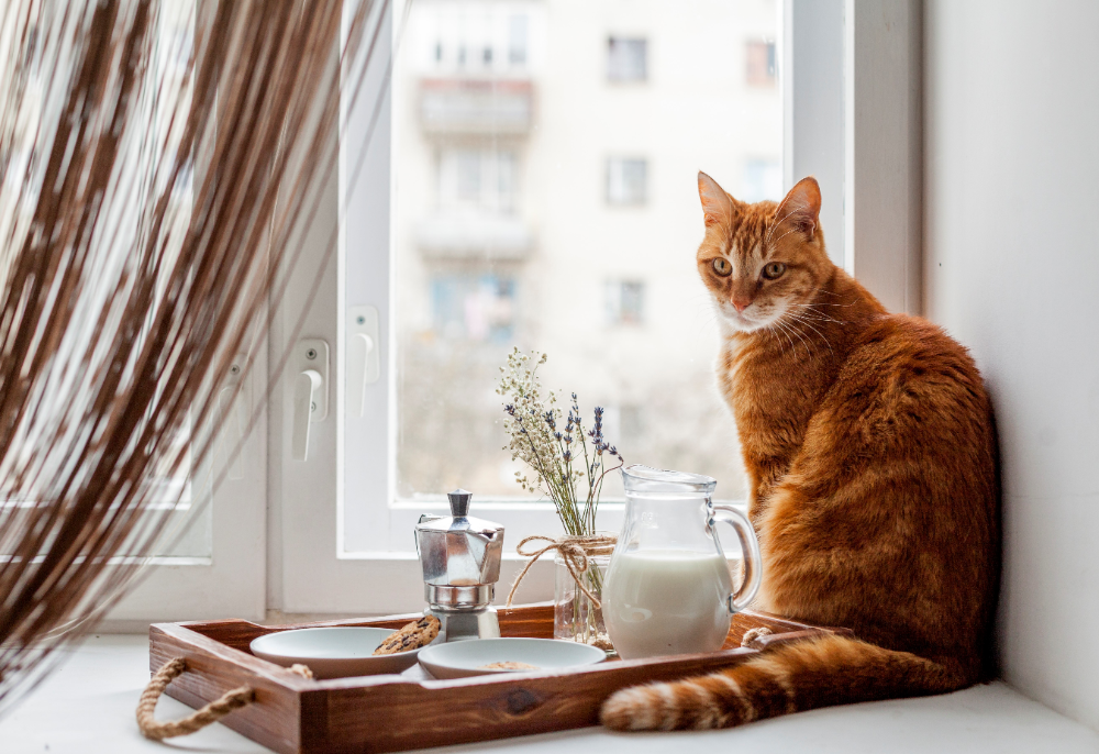 cats-nutrition-guide