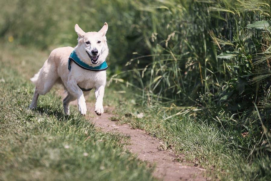 choosing best gps dog collar