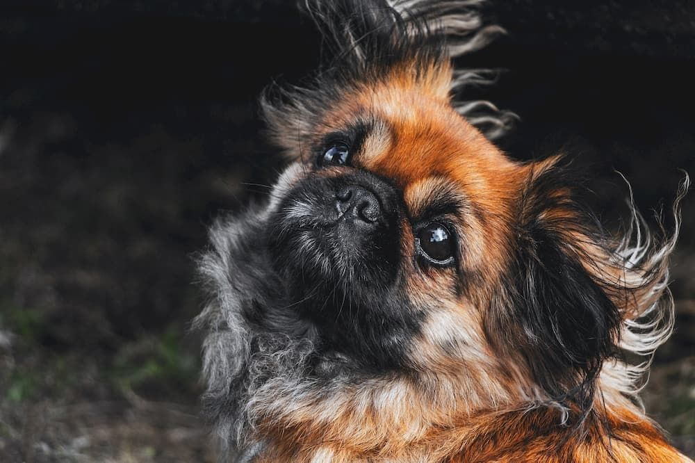 choosing right foor for my small dog