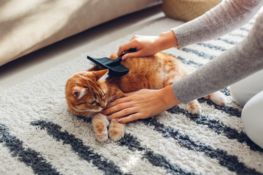 combing and brushing your cat