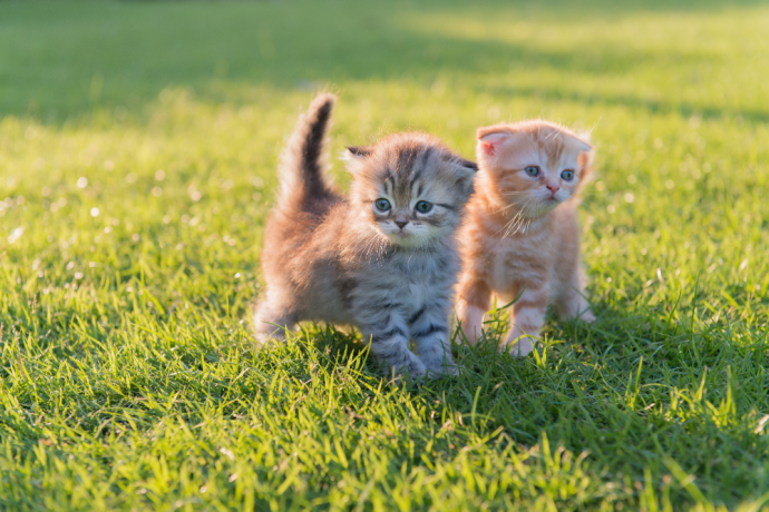 Kitten Constipation: Causes, Symptoms, and Treatment