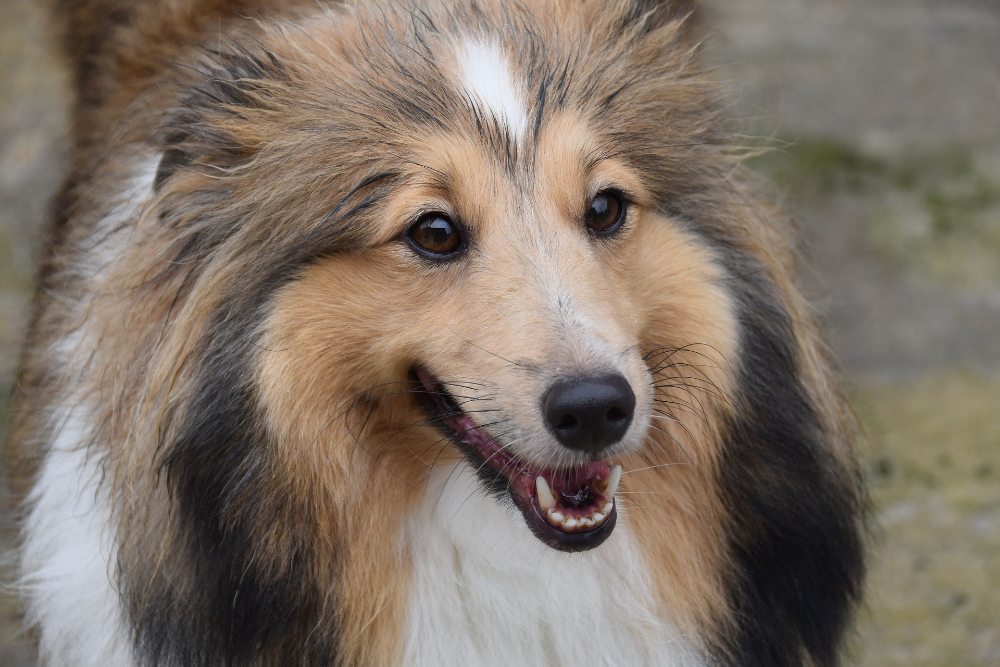 do female dogs change after being spayed
