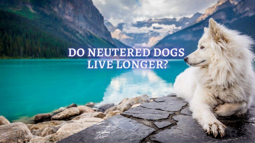 do neutered dogs live longer