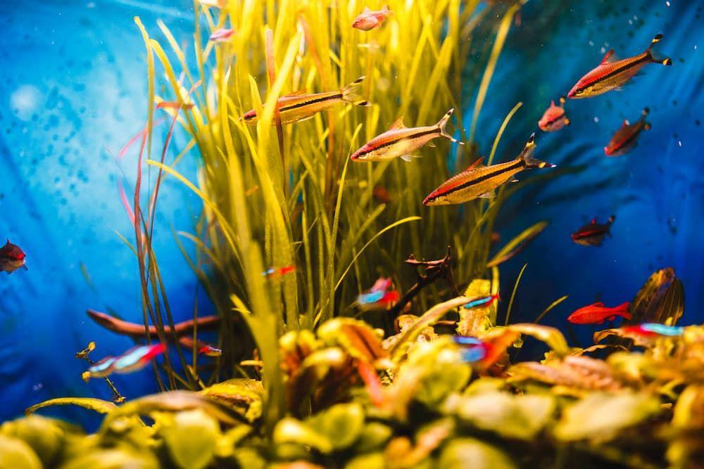 does plant food harm aquarium fish