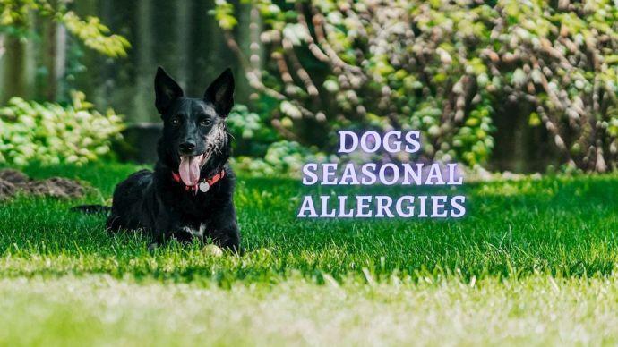 Dogs Seasonal Allergies