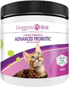 doggone best cat probiotics