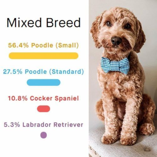 embarkvet dna breed test result example