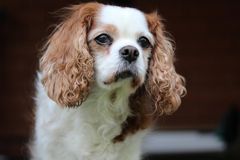female dog spay