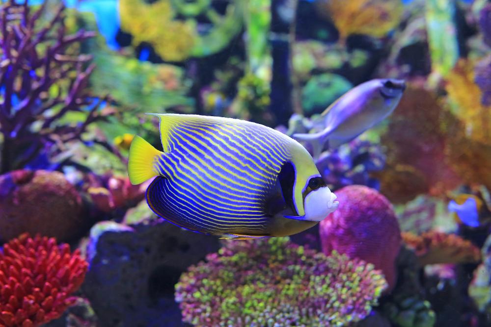 fish for starter aquarium