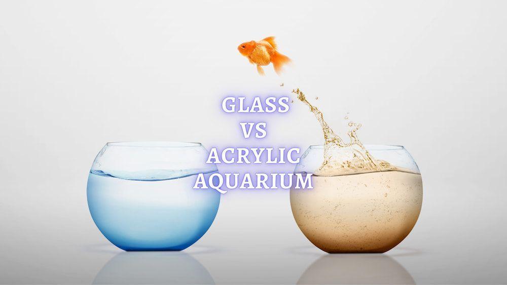 glass vs acrylic aquarium